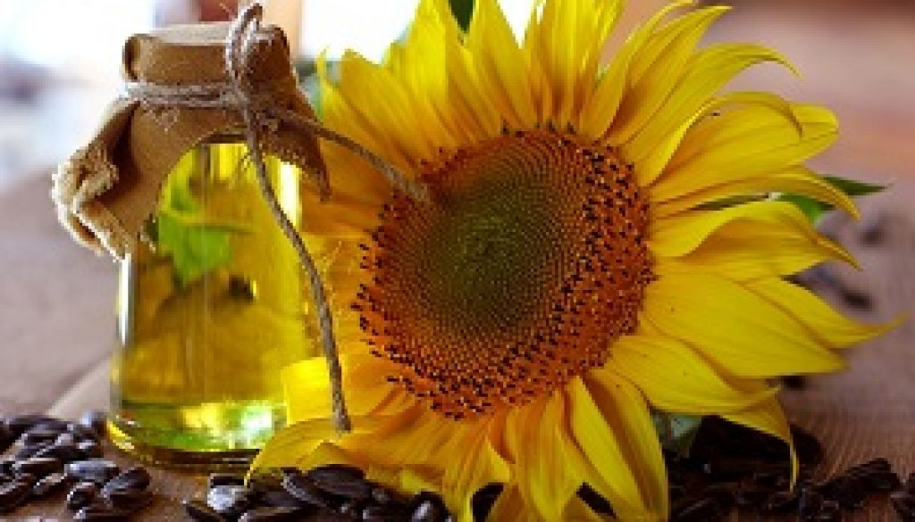 Sunflower_oil_and_sunflower-1